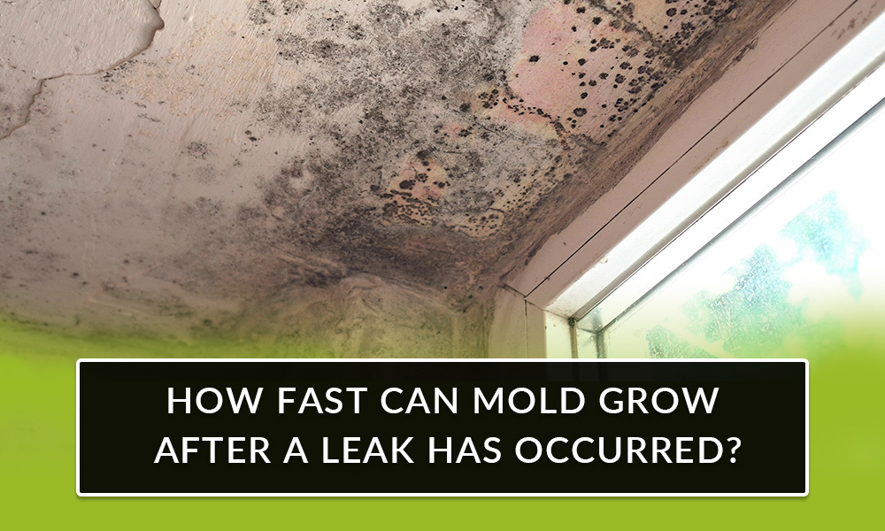 How fast can mold grow after a leak in my home?