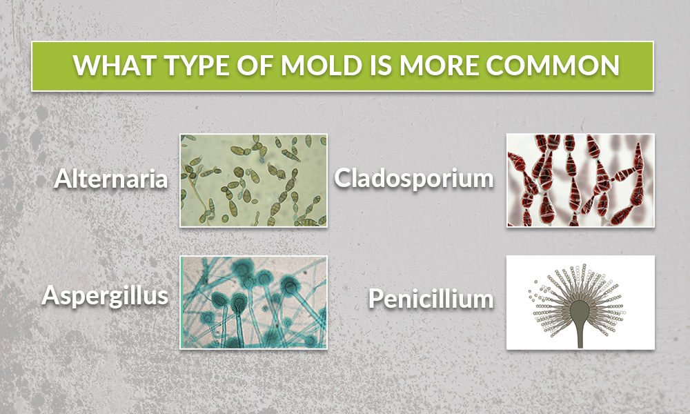 What type of mold is more common?