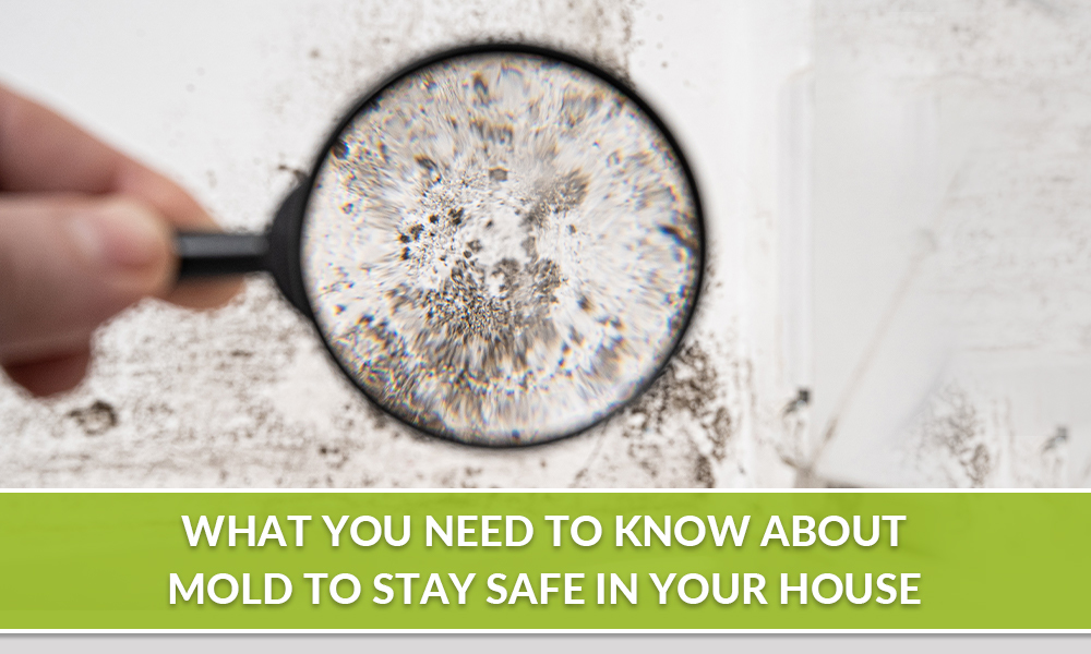 What You Need to Know about Mold to Stay Safe in Your House